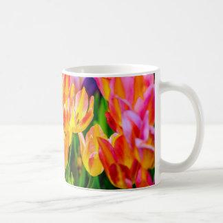 Tulpe-Blumen - blühen Sie Tasse