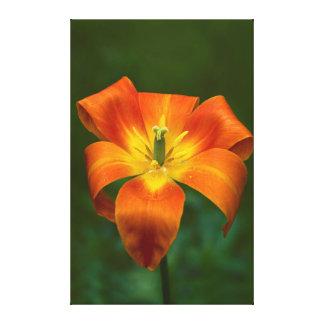 Tulpe Leinwanddruck