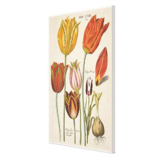 Tulpen Leinwanddruck