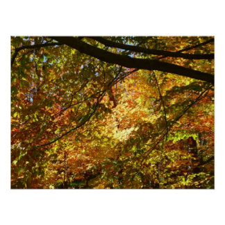 Überdachung der gelben Herbst-Natur des Poster