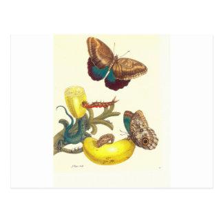 Überziehen Sie #23- Musa paradisiaca, Caligo Postkarte