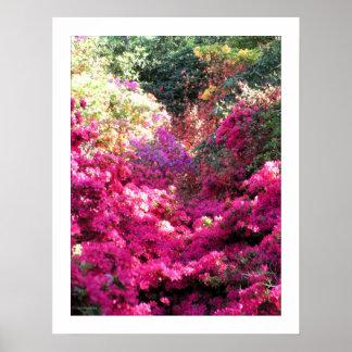 UNBERECHTIGTER Rhododendron-Blumenphotographie Poster