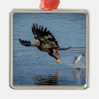 Unreifer Weißkopfseeadler, der einen Fisch Quadratisches Silberfarbenes Ornament