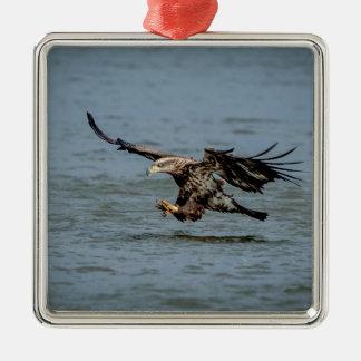 Unreifes Weißkopfseeadlertauchen für einen Fisch Quadratisches Silberfarbenes Ornament