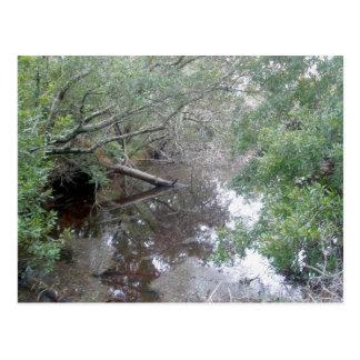 Unreine Sumpfgebiet Buxton OBX Postkarte