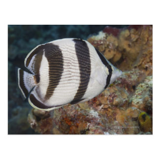 Unterwasserleben; FISCHE:  Ein mit einem Band Postkarte