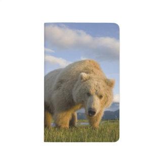 USA, Alaska, Katmai Nationalpark, Braunbär 3 Taschennotizbuch