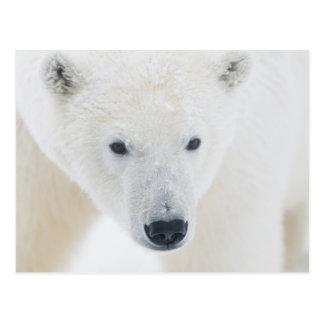 USA, Alaska, Küstenebene 1002 von den arktischen 3 Postkarte