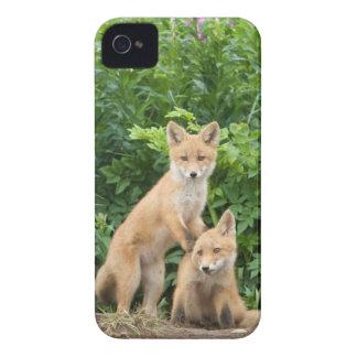 USA, Alaska, McNeil Fluss. Roter Fox. 5 iPhone 4 Cover