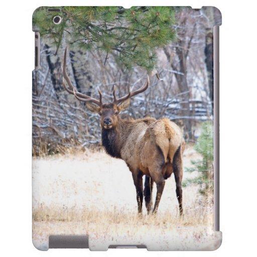USA, Colorado, Stier-Elch, der zurück schaut