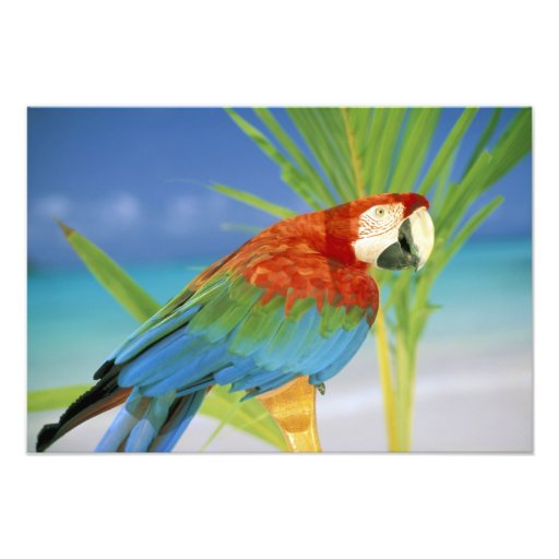 USA, Hawaii. Papagei Photodruck