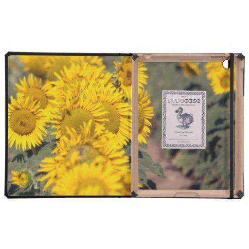 USA, Kansas. Sonnenblumen (Helianthus Annuus) iPad Hüllen