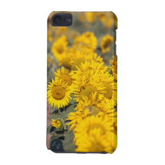 USA, Kansas. Sonnenblumen (Helianthus Annuus) iPod Touch 5G Hülle