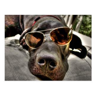 Verrückter, fauler Loungin Hund Postkarte