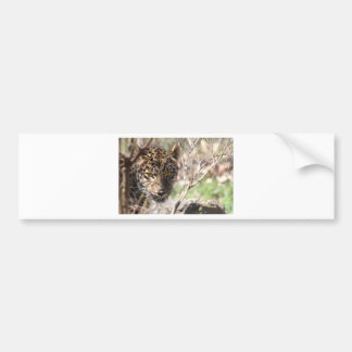 Versteckender Leopard Autoaufkleber