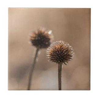 Verwelkte Kugeldistel in Herbst Makro Keramikfliese