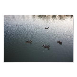 Vier Enten Kunst Photo