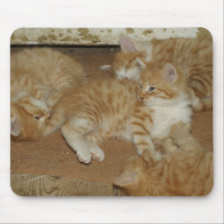 Vier rote Tabbies Mousepads