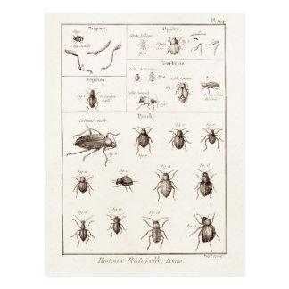 Vintage 1800s Insekten-Wanzen-Käfer-Illustration Postkarte