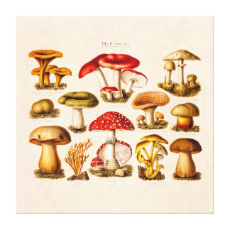 Vintage 1800s Pilz-Vielzahl-Rot-Pilze Gespannter Galeriedruck