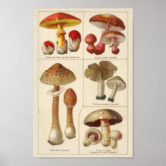 Vintage 1900 Pilz-Vielzahl-roter gelber Druck Poster