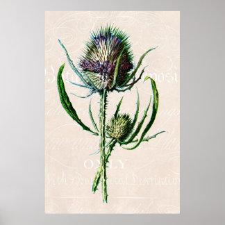 Vintage 1902 Scottish-Distel-alte wilde Blume Poster