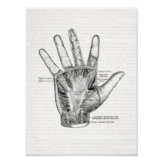 Vintage Anatomie-Kunst die Palme der Hand Poster