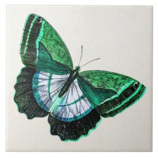 Vintage antike grüne Schmetterling 1800s Große Quadratische Fliese