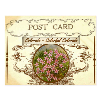 Vintage Colorado-Staats-Blumen-Postkarte Postkarte