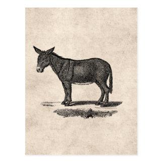 Vintage Esel-Illustration - Esel 1800's Postkarte