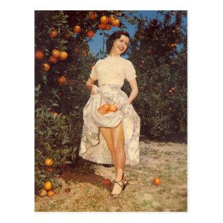 Vintage Florida-Orangen-Postkarte Postkarte