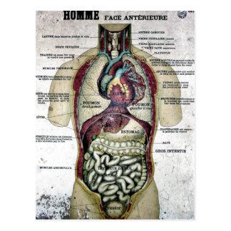 Vintage französische Anatomie-Postkarte Postkarten