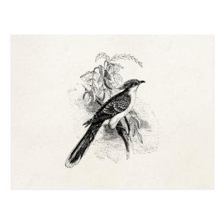 Vintage große gepunktete Kuckuck-Vogel-Retro Vogel Postkarte