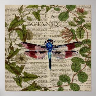 Vintage Libelle der französischen botanischen Poster