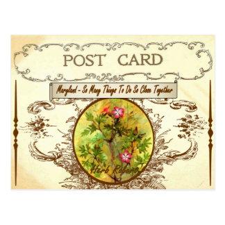 Vintage Maryland-Staats-Blumen-Postkarte Postkarten