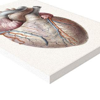 Vintage menschliche Anatomie-Herz-Organe gesund Leinwanddruck