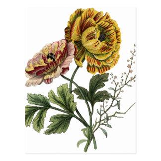 Vintage Mohnblumen-Blumen Postkarten