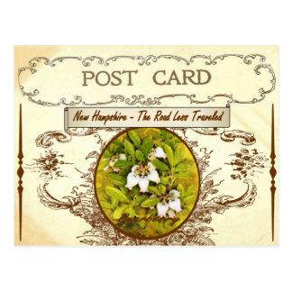 Vintage New Hampshire Staats-Blumen-Postkarte Postkarte