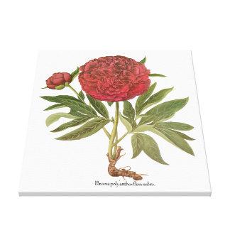 Vintage Pfingstrosen-Pfingstrosen-Blumen durch Leinwanddruck