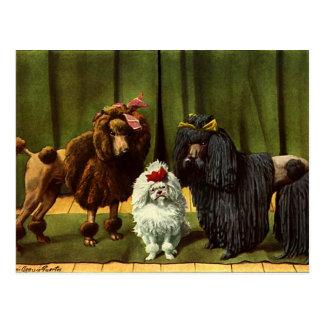 Vintage Pudel-Hunde Postkarte