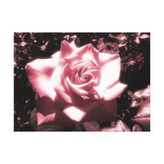 Vintage rosa Rose Leinwanddruck