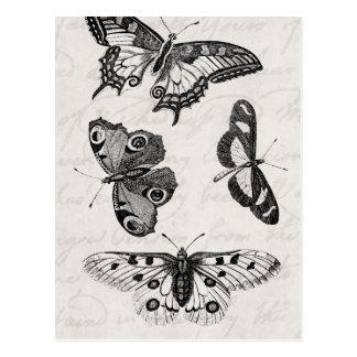 Vintage Schmetterlings-Illustration 1800s Postkarten
