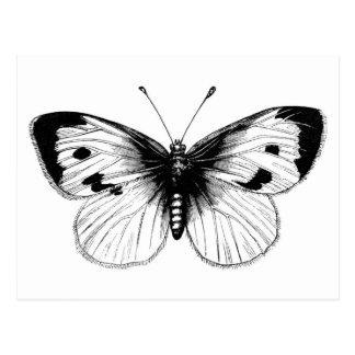 Vintage Weißkohl-Schmetterlings-Illustration Postkarten