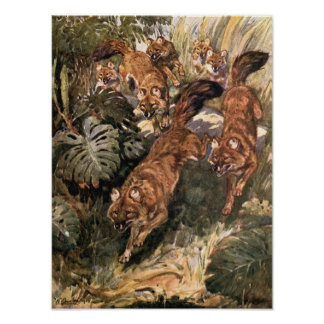 Vintage wilde Hunde, Dholes durch Winifred Austen Poster