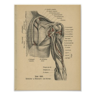 Anatomie der Hals-Diagramm-oberflächlichen u. Poster | Zazzle.at