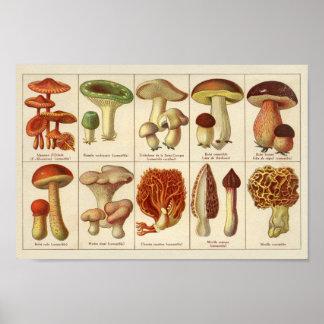 Vintager 1900 Pilz-Vielzahl-Grün-Brown-Druck Poster