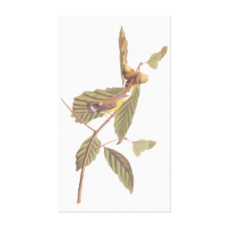 Vintager Audubon Magnolien-Trällerer-Vogel Leinwanddruck