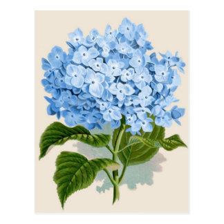 Vintager blauer Hydrangea Postkarte