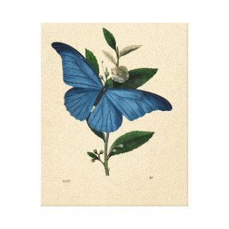 Vintager blauer Schmetterling Galerie Gefaltete Leinwand