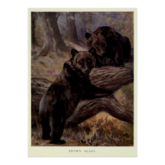 Vintager Brown-Bär Painting (1909) Poster